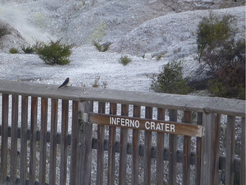 Wai-o-tapu-nouvelle-zelande-xaviere-l-aventuriere-inferno-crater