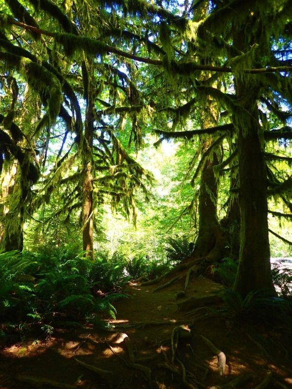 Et si on méditait Xavière l'Aventurière arbres forêt