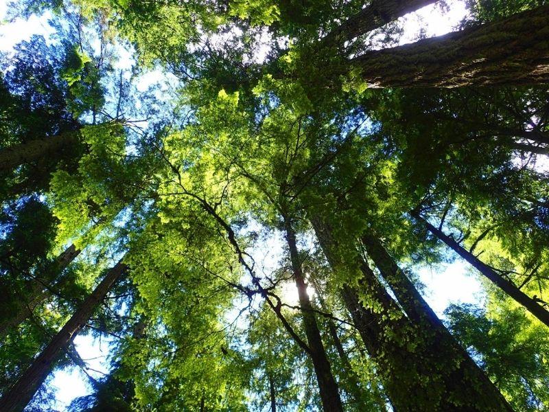 Et si on méditait Xavière l'Aventurière arbres