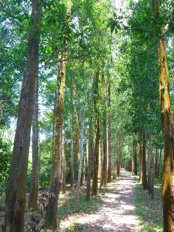 Et si on méditait Xavière l'Aventurière chemin arbres