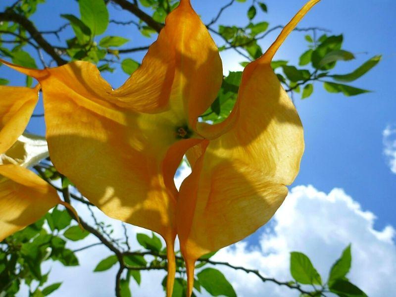 Et si on méditait Xavière l'Aventurière fleur soleil