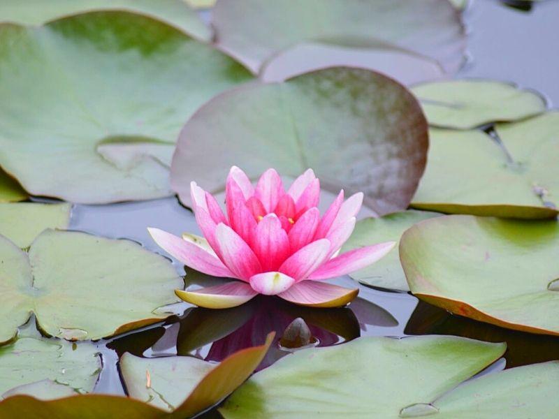 Et si on méditait Xavière l'Aventurière lotus