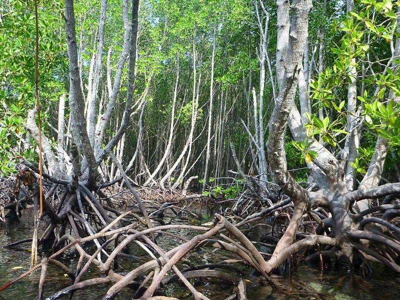 Et si on méditait Xavière l'Aventurière mangrove